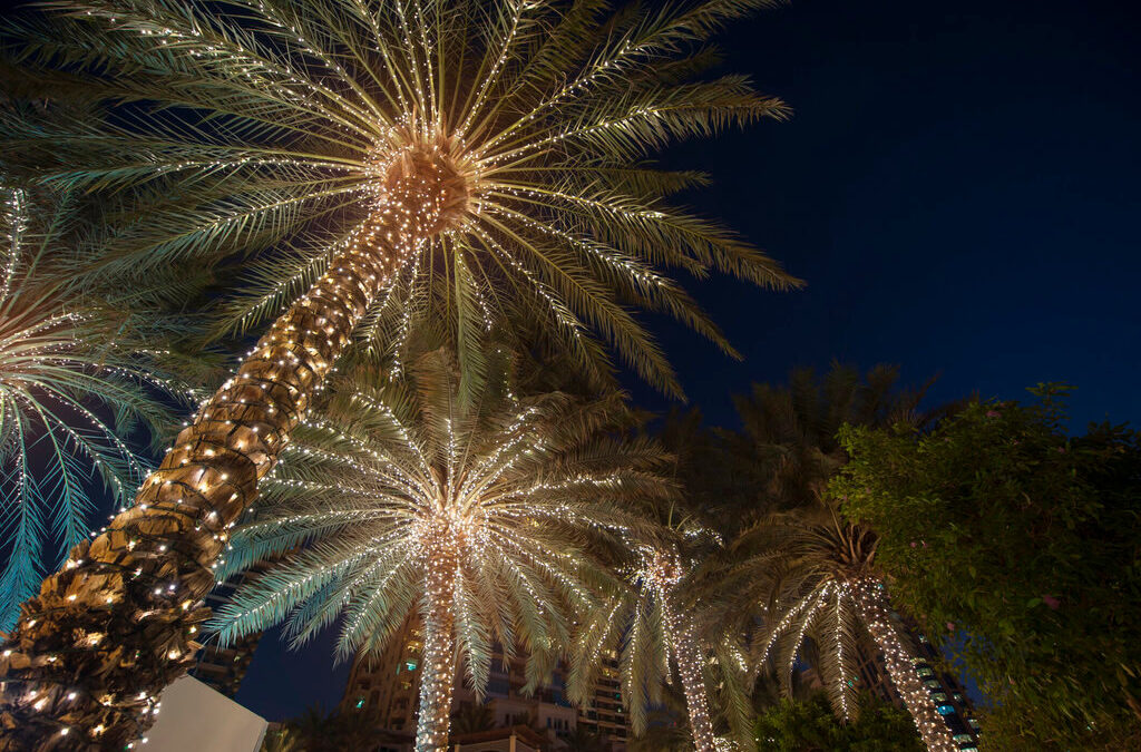 Ideas For Palm Tree Christmas Lights!