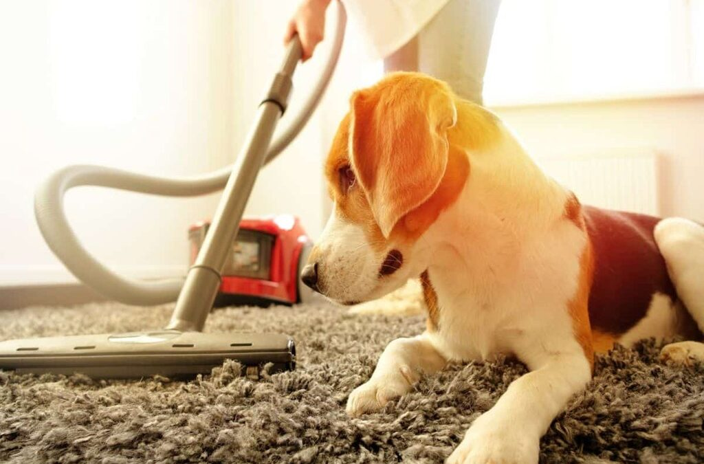 How to Eliminate Pet Hair in Your Home?