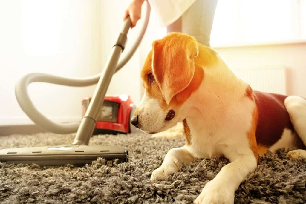 Eliminate Pet Hair in Your Home