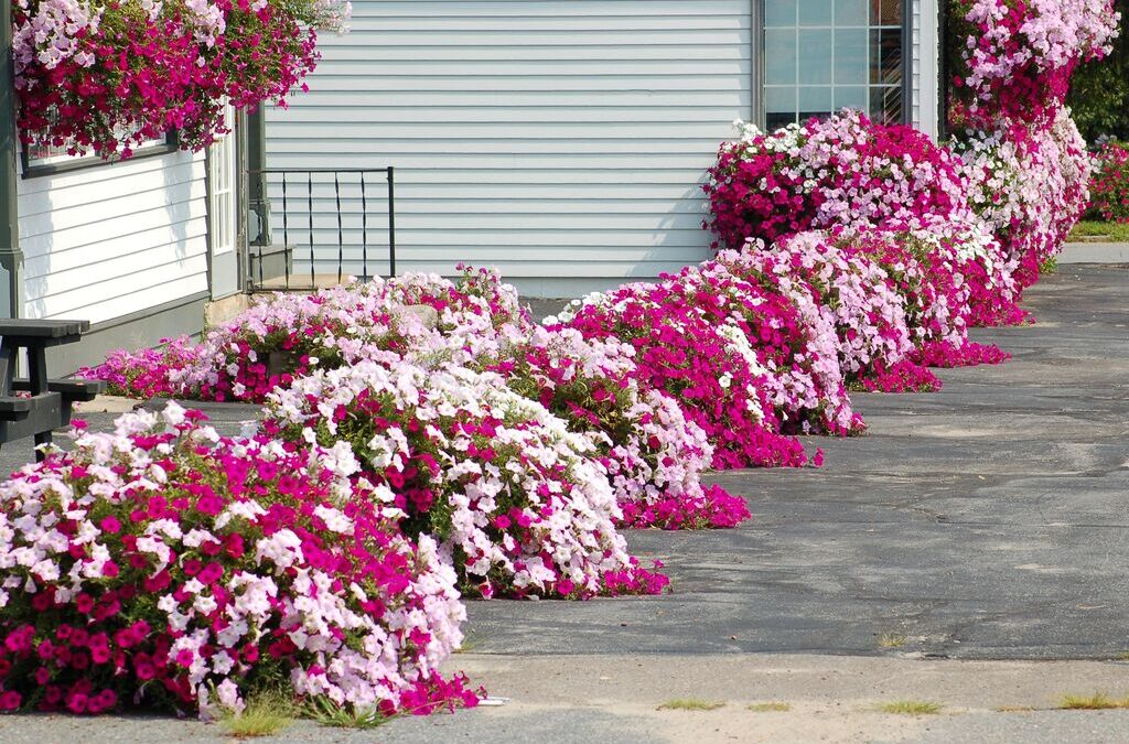 Choose Right From The Front Yard Landscaping Ideas
